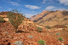 Desert landscape Stock Photo