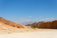 Desert landscape with acacia trees Stock Photos