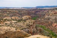 Desert landscape along Calf Creek Canyon, Highway 12, Utah. Scenic desert landscape with trees growing in Calf Creek Canyon, Highway 12, Utah Royalty Free Stock Image