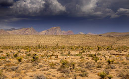 Desert landscape in Arizona Royalty Free Stock Photography