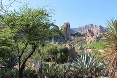 Desert Landscape in Arizona royalty free stock images