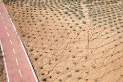 Desert landscape with bicycle lane Stock Photography