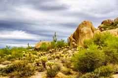 Desert landscape with Boulders with Saguaro and Cholla Cacti Stock Image