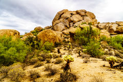 Desert landscape with Boulders with Saguaro and Cholla Cacti Royalty Free Stock Photos