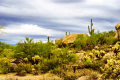 Desert landscape with Boulders with Saguaro and Cholla Cacti Royalty Free Stock Image