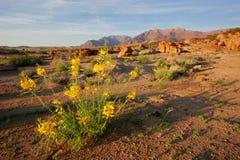Desert landscape, Brandberg mountain, Namibia. Desert landscape at sunrise, Brandberg mountain, Namibia, southern Africa Royalty Free Stock Photography