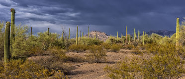 Desert landscape with cactus royalty free stock images