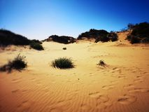 Desert landscape of the Canaries. Sand dunes in the Canaries and the sea, beach royalty free stock photo