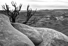 Desert landscape. Canyonlands National Park in black and white, Utah Royalty Free Stock Images