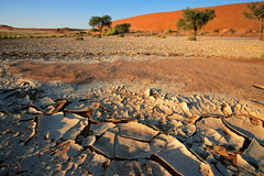 Desert landscape. With cracked mud, Acacia trees and red sand dunes, Sossusvlei, Namibia stock photo