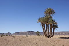 Desert landscape with date palms and mountains. Royalty Free Stock Photography
