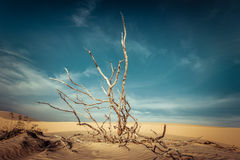 Desert landscape with dead plants in sand dunes. Global warming Royalty Free Stock Image