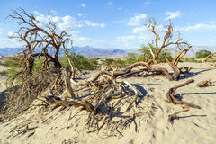 Desert landscape in the death valley Stock Photo