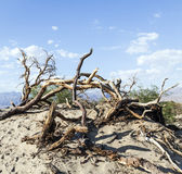 Desert landscape in the death valley Stock Images