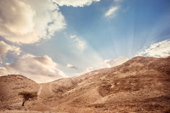 Desert landscape. Dramatic landscape of the Negev desert in Israel Royalty Free Stock Photos