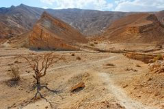 Desert landscape with dry acacia trees Royalty Free Stock Image