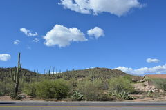 Desert landscape Royalty Free Stock Photo