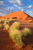 Desert landscape. With grasses and red sand dunes, Sossusvlei, Namibia stock image