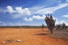 Desert landscape on the Hato Plain, Curaçao Royalty Free Stock Photography