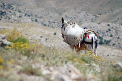 Desert landscape with horse in Northern Kurdistan Stock Photography