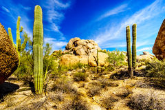 Desert Landscape and Large Rock Formations with Saguaro Cacti. At the Boulders in the desert near Carefree, Arizona Stock Photos