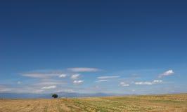 Desert landscape with lone tree Stock Photos