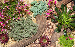 Desert landscape made with succulents and stones. Royalty Free Stock Photos