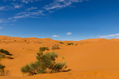 Desert landscape, Morocco Royalty Free Stock Photos