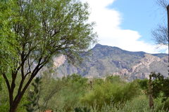 Desert landscape. With mountains in background. Tucson foothills Stock Photography