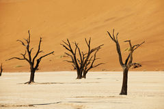 Desert landscape of Namib at Deadvlei Royalty Free Stock Photos