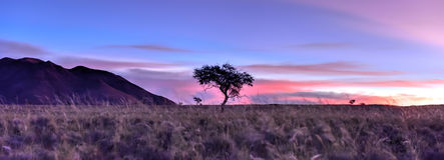 Desert Landscape - NamibRand, Namibia Stock Photos