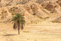 Desert landscape in North Africa Royalty Free Stock Photos