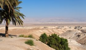 Desert landscape with oasis Royalty Free Stock Photos