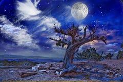 Desert. Landscape with old tree stock illustration