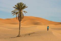 Desert landscape with palm stock photos