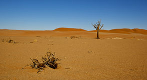 Desert landscape. Panoramic view of a desert landscape with a solitary bare branched tree Royalty Free Stock Photos