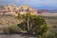 Desert Landscape with Red Rock Stock Photo