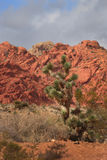 Desert Landscape with Red Rock and Pinyon Pine Stock Images