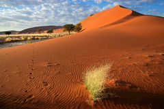 Desert landscape. With red sand dunes and grass, Sossusvlei, Namibia stock image