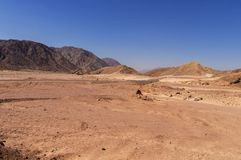 Desert landscape, road, camels. Mountains of South Sinai Egypt royalty free stock image