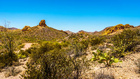 Desert Landscape and rugged Mountains in Tonto National Forest in Arizona, USA Royalty Free Stock Images