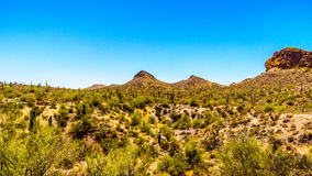 Desert Landscape and rugged Mountains in Tonto National Forest in Arizona, USA Stock Image