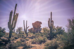 Desert landscape saguaro cactus and boulders Royalty Free Stock Photo
