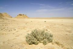 Desert landscape - Sahara, Tunisia. A lonely bush in the Sahara Desert Royalty Free Stock Photography