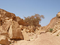 Desert landscape of Sinai Peninsula Royalty Free Stock Image