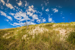 Desert landscape, Slowinski National Park near Leba, Poland Royalty Free Stock Photo