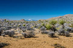 Desert Landscape with Snowy Mountain Stock Photography