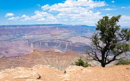 Desert landscape of the southwest of the USA. Grand Canyon and desert plants royalty free stock image