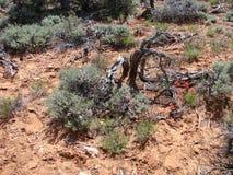 Desert Landscape. A splash of color in an arid landscape Stock Image