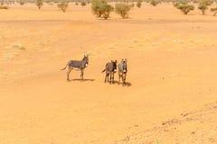 Desert landscape in Sudan Royalty Free Stock Photos